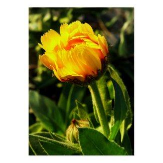 yellow daisy profilecard