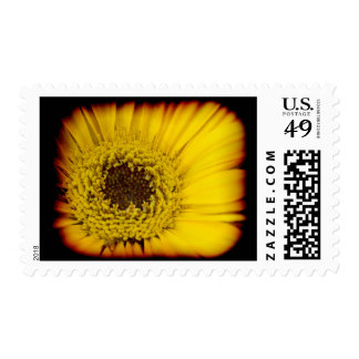 Yellow Daisy Center Black Edge Postage Stamps
