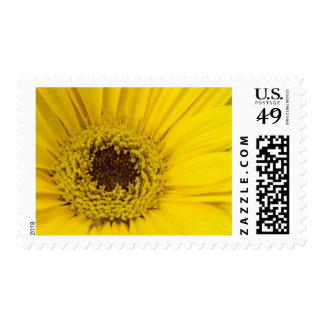 Yellow Daisy Center Postage