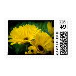 Yellow Daisy Dark Edge Stamps
