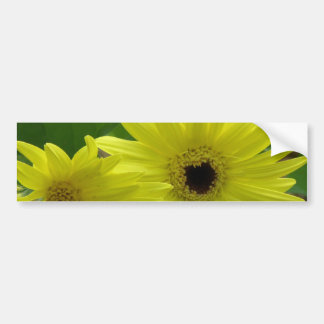 Yellow Daisy Festival Bumper Sticker