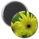 Yellow Daisy Festival Magnet Refrigerator Magnets