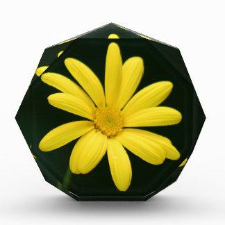 Yellow Daisy flower Award