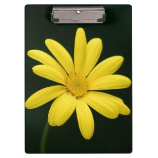 Yellow Daisy flower Clipboards