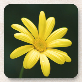 Yellow Daisy flower Drink Coaster