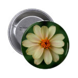 Yellow Daisy Flower green background close up Pinback Buttons