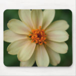 Yellow Daisy Flower green background close up Mousepad