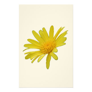 Yellow Daisy Flower Isolated Stationery