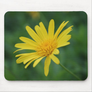 Yellow Daisy Flower With Garden Background Mouse Pad