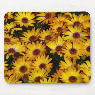 Yellow daisy flowers in spring mouse pad