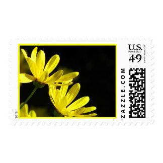 Yellow Daisy Flowers Stamps