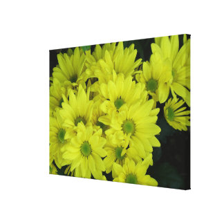 yellow daisy flowers stretched canvas print