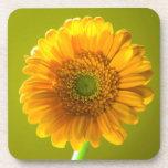 Yellow Daisy Gerbera Flower Beverage Coasters