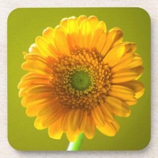 Yellow Daisy Gerbera Flower Coaster