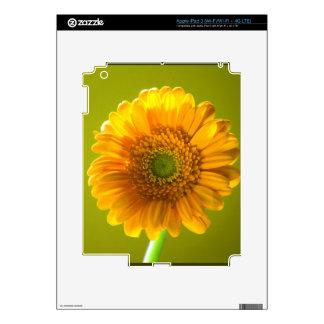 Yellow Daisy Gerbera Flower Decal For iPad 3