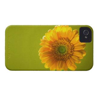 Yellow Daisy Gerbera Flower iPhone 4 Case