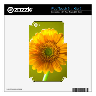 Yellow Daisy Gerbera Flower iPod Touch 4G Skin