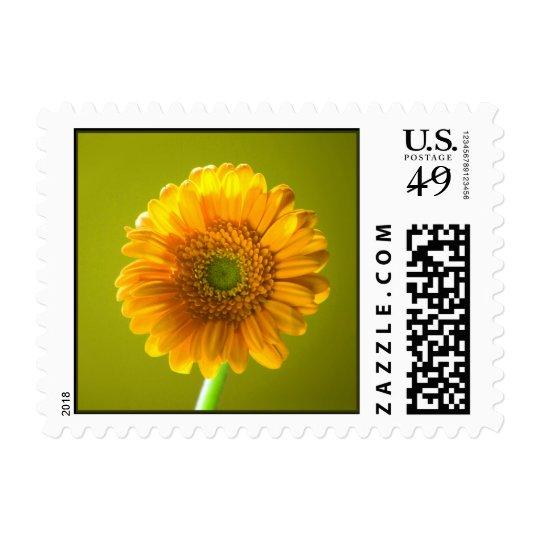Yellow Daisy Gerbera Flower Postage
