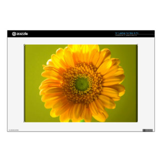"Yellow Daisy Gerbera Flower Skins For 13"" Laptops"
