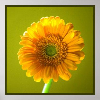 Yellow Daisy Gerbera Print