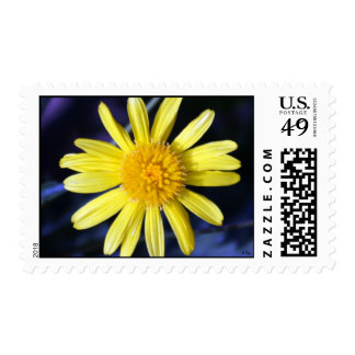 Yellow Daisy Postage Stamp
