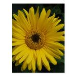Yellow Daisy Postcard