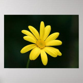 Yellow Daisy poster print
