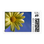 Yellow Daisy Stamps
