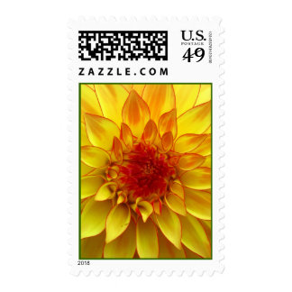 Yellow Dalia Flower Postage Stamps