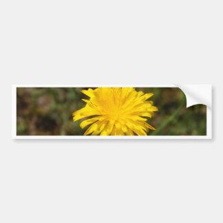 Yellow Dandelion Bumper Sticker