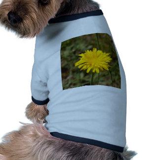 Yellow Dandelion Dog Clothing