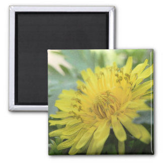 Yellow Dandelion In The Shade Magnet