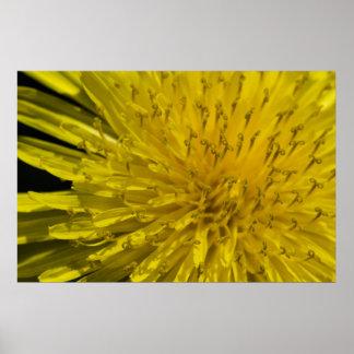 Yellow Dandylion Macro Poster