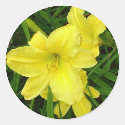 Yellow Daylilies Sticker