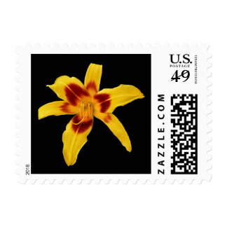 'Yellow Daylilly' Stamps