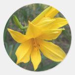 Yellow Daylily 6 Stickers