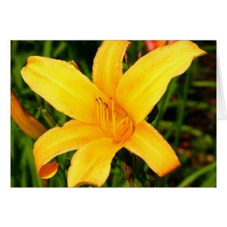 Yellow Daylily Card