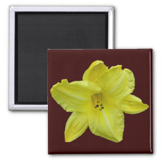 Yellow Daylily Coordinating Items Magnet