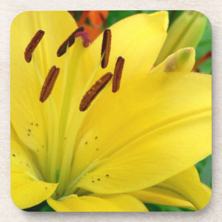 Yellow daylily drink coaster