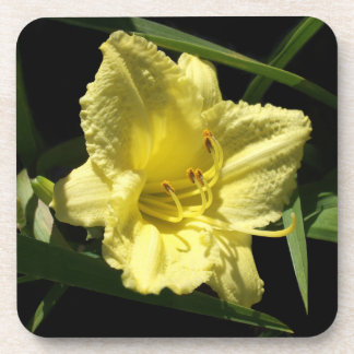 Yellow Daylily Flower Hemerocallis Beverage Coaster
