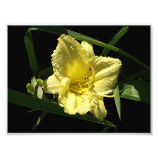Yellow Daylily Flower Photo Print
