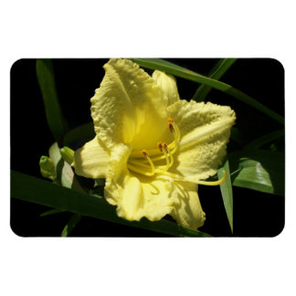 Yellow Daylily Flower Magnets