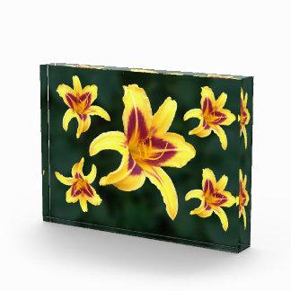Yellow Daylily Flower with Red, Hemerocallis Award