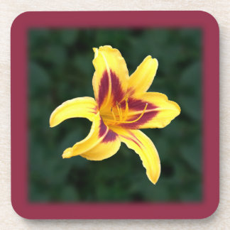 Yellow Daylily Flower with Red, Hemerocallis: Coaster