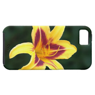 Yellow Daylily Flower with Red, Hemerocallis iPhone SE/5/5s Case
