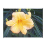 Yellow Daylily Gallery Wrapped Canvas