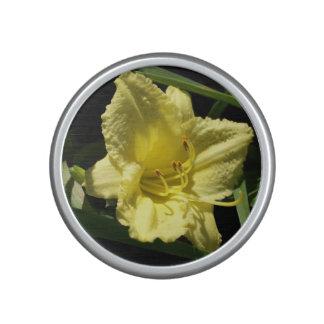 Yellow Daylily Hemerocallis Speaker