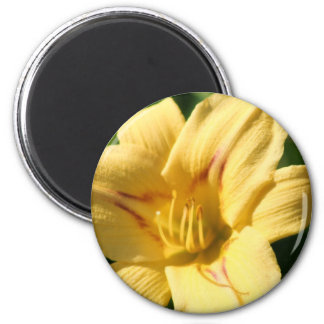 Yellow Daylily magnet