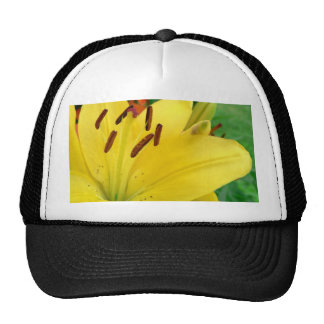 Yellow daylily trucker hat