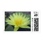 Yellow Dazzler Postage Stamps
